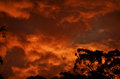 Australian Bush Sunset Royalty Free Stock Photo