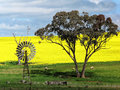 Australian countryside with vintage windmill at spring Royalty Free Stock Photo