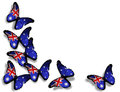 Australian flag butterflies on white Stock Images