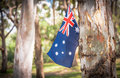 Australian flag on eucalyptus tree in bush Royalty Free Stock Photo