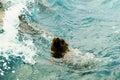 Australian fur seal swimming. Royalty Free Stock Photo