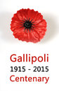 Australian gallipoli centenary wwi april tribute with red poppy lapel pin badge on white background sample text Royalty Free Stock Photo