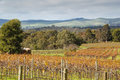 Australian landscape autumn in the barossa valley south australia Royalty Free Stock Photography