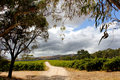 Australian landscape rain clouds brewing over a vineyard in south australia Stock Images