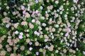 Australian native wild flowers Royalty Free Stock Photo