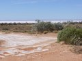 Australian outback with saline lakes the vegetation in the plain desert and a salt lake in the back of south australia opposite a Royalty Free Stock Image