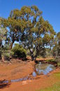 Australian outback water hole in the Stock Photography