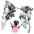 Australian Shepherd dog head graphic, outline portrait with a few colors Royalty Free Stock Photo