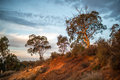 Australian Sunset Over Redhill Royalty Free Stock Photo