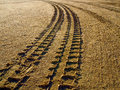 Australian trecking tyre tracks left in the sand in the outback Royalty Free Stock Photography