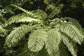 Australian tree fern Stock Photos