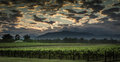 Australian Vineyard landscape Royalty Free Stock Photo