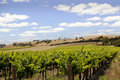 Australian vineyard landscape spring in the in the barossa valley south australia Royalty Free Stock Photos