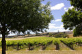 Australian vineyard landscape spring in the in the barossa valley south australia Stock Photo