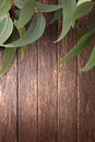 Australian wood background leaves a with eucalyptus tree Stock Photography