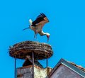 Austria rust nest of a stork s on achornstein in burgenland Stock Photo
