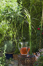 Austria, Salzburger Land, Carafe with refreshment next to flower vase in garden Royalty Free Stock Photo