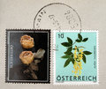 Austria stamp Royalty Free Stock Photography