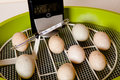 Automatic egg incubator Royalty Free Stock Images