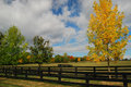 Automn field and trees in ontario canada Stock Image