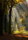 Autum in the forest. Royalty Free Stock Photo