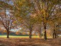 Autumn at the 5th hole Royalty Free Stock Photography