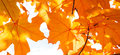 Autumn abstract beautiful leaves glowing in the sun Stock Photos
