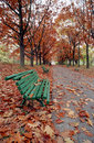 Autumn alley and bench Stock Image