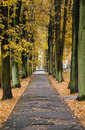 Autumn alley in a city Stock Photos