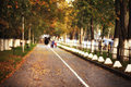 Autumn alley in the city leaves Royalty Free Stock Photo