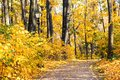 Autumn alley park landscape. Fall season nature landscape with pathway, yellow leaves tree background Royalty Free Stock Photo