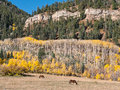 Autumn along the million dollar highway colors above a pasture in western colorado Royalty Free Stock Image