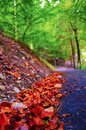Autumn in the Alps, Italy Royalty Free Stock Photo