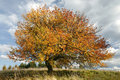 Autumn apple-tree Stock Images