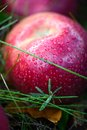 Autumn apples the big red Stock Image