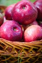 Autumn apples big red in the basket Stock Photography