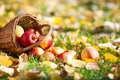 Autumn apples on grass Stock Images