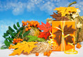 Autumn arrangement with gift box marple leaves pumpkins hay and ro on blue gradient background Stock Photography