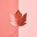 Autumn Art. Fall Fashion. Minimal. Maple Leaf Royalty Free Stock Photo