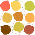 Autumn aspen leaves Royalty Free Stock Photo