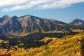 Autumn aspens near Kebler Pass in Colorado Royalty Free Stock Photo
