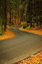 Autumn asphalt road empty in forest Royalty Free Stock Photo