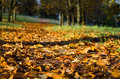 Autumn atmosphere at a leafy alley,Background photo of fall Royalty Free Stock Photo