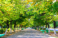 Autumn avenue Stock Photography