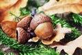 Autumn Background With Acorns