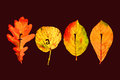 Autumn background banner with colorful leaves in decorative style and text fall template for greeting card on maroon Stock Photo