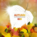 Autumn background with a card Stock Image