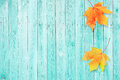 Autumn background with colored maple leaves on old wooden board Royalty Free Stock Photo