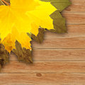 Autumn background with colored maple leaves on wooden board Royalty Free Stock Image