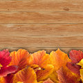 Autumn background with colored viburnum leaves on wooden board Royalty Free Stock Photos